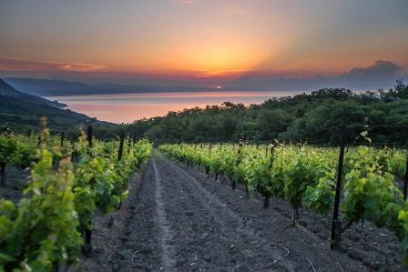 В ПАО «Массандра»  требуются виноградари