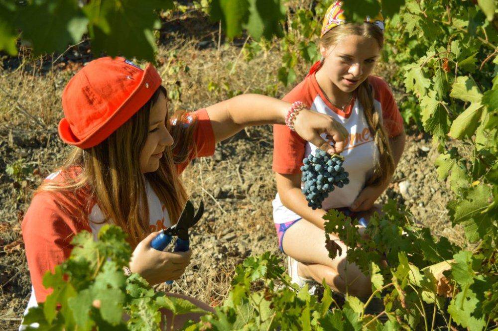 Артековцы о массандровских виноградниках: «Мы будто бы в Италии»