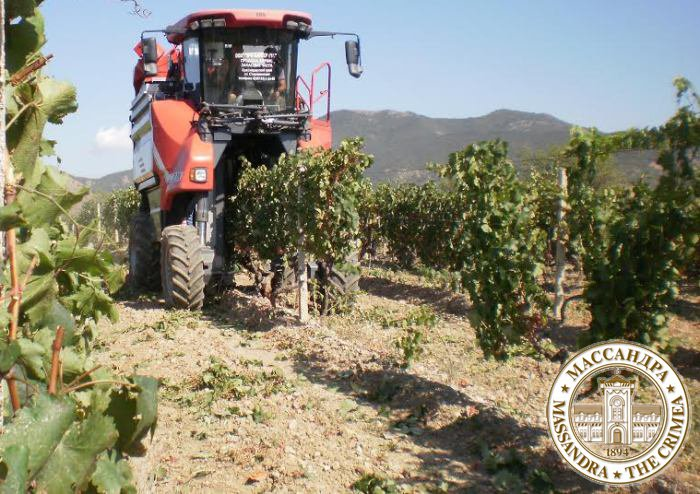 В поля «Массандры» впервые в истории вышел виноградоуборочный комбайн