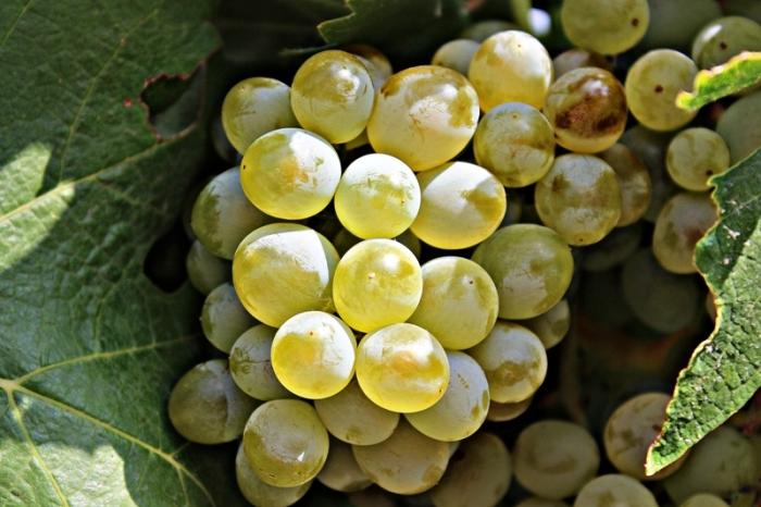 «Массандра» провела переукупорку вин урожая 1945 года