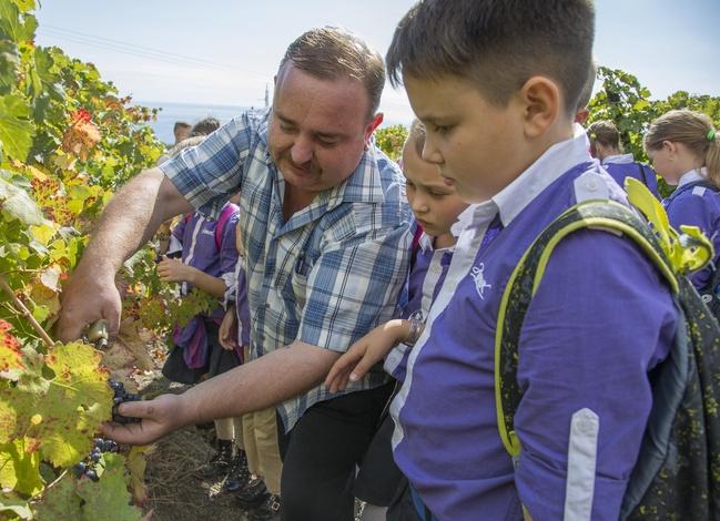Вдохновленные «Массандрой» артековцы мечтают выращивать виноград на балконах
