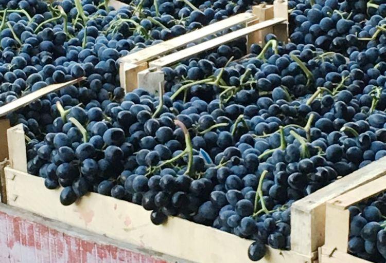 «Массандра» предлагает к новогоднему столу виноград по 50-65 р.
