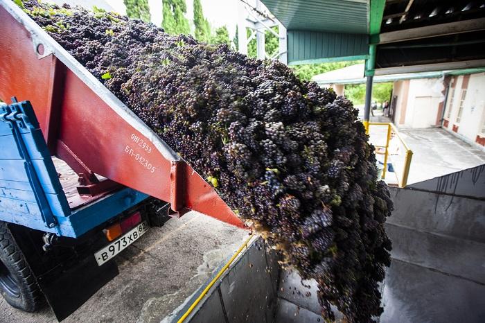 В «Массандре» стартовал сезон виноделия-2019
